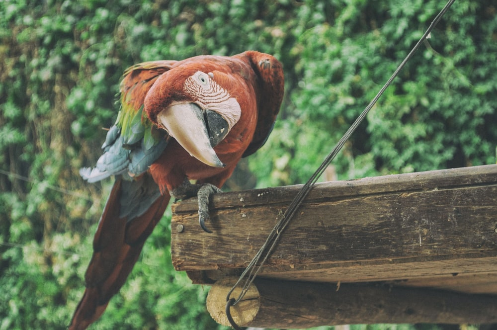 photo of Macaw parrot standing on brown wooden surface