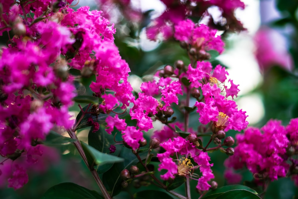 green-leafed plant with pink flowers