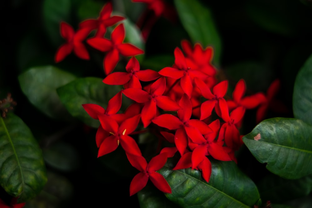 red petaled flower bloom close-up photography