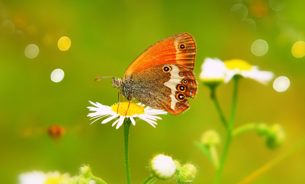 shallow focus photography of orange and brown butterfly