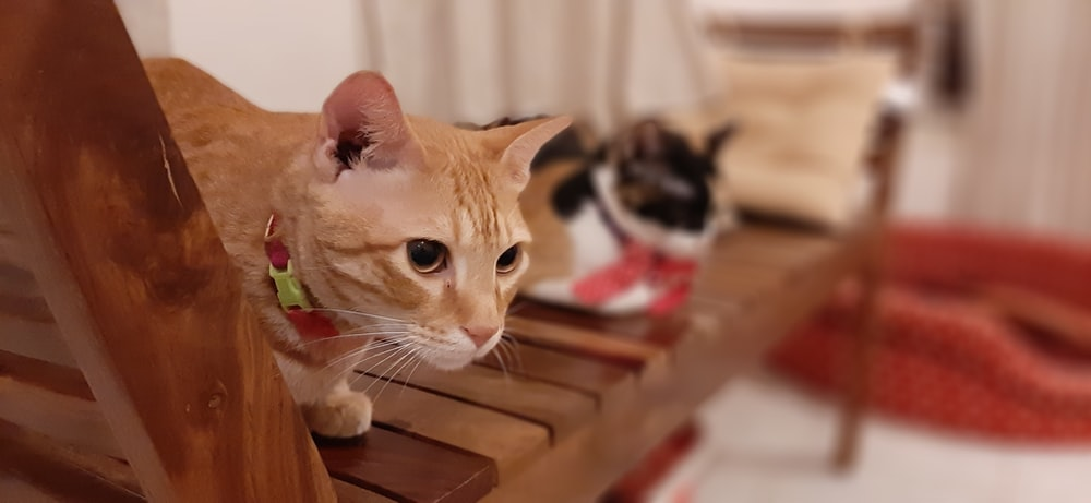 close-up photo of orange tabby cat sitting on wooden bench