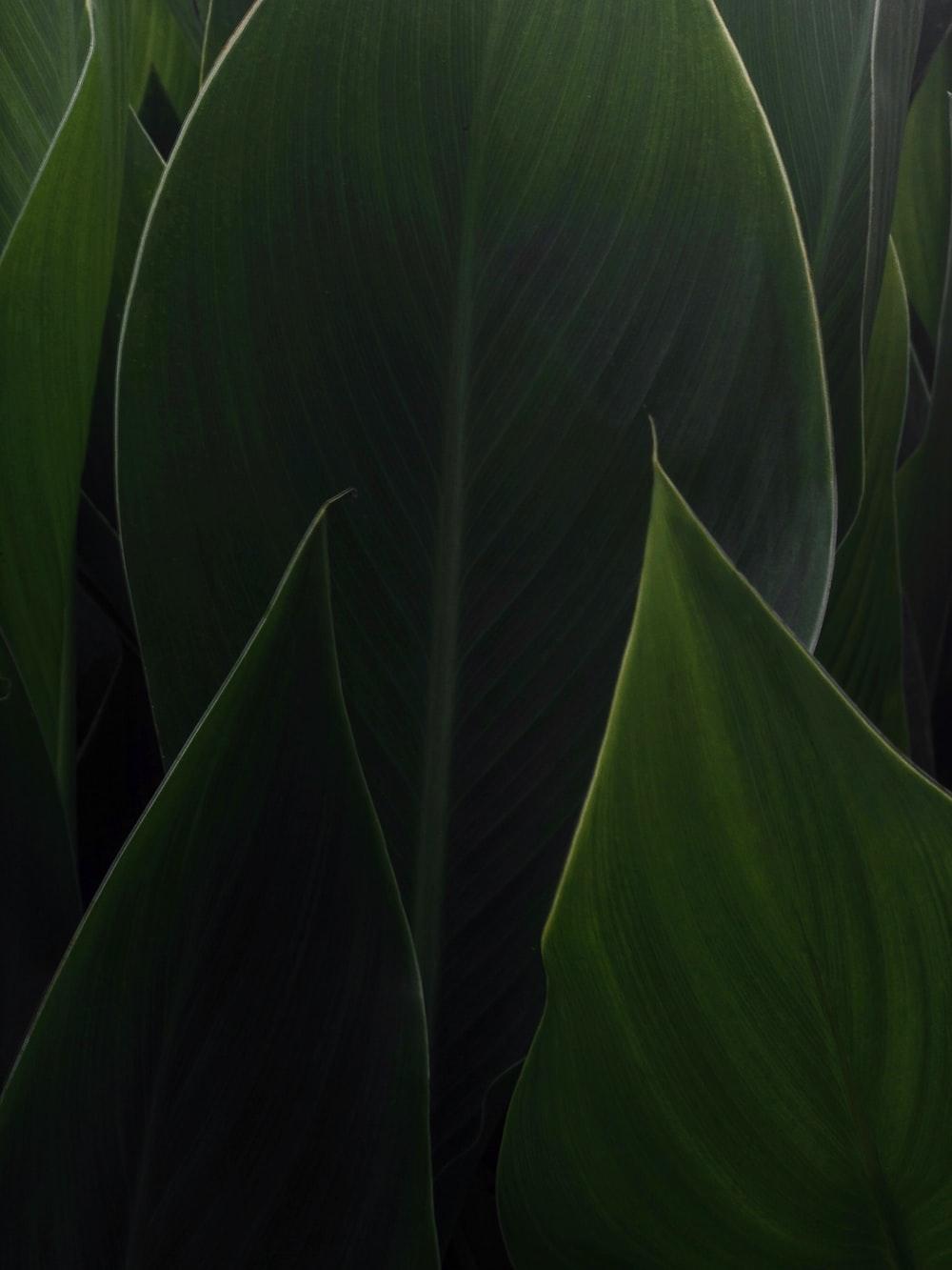 shallow focus photo ofgreen leaf