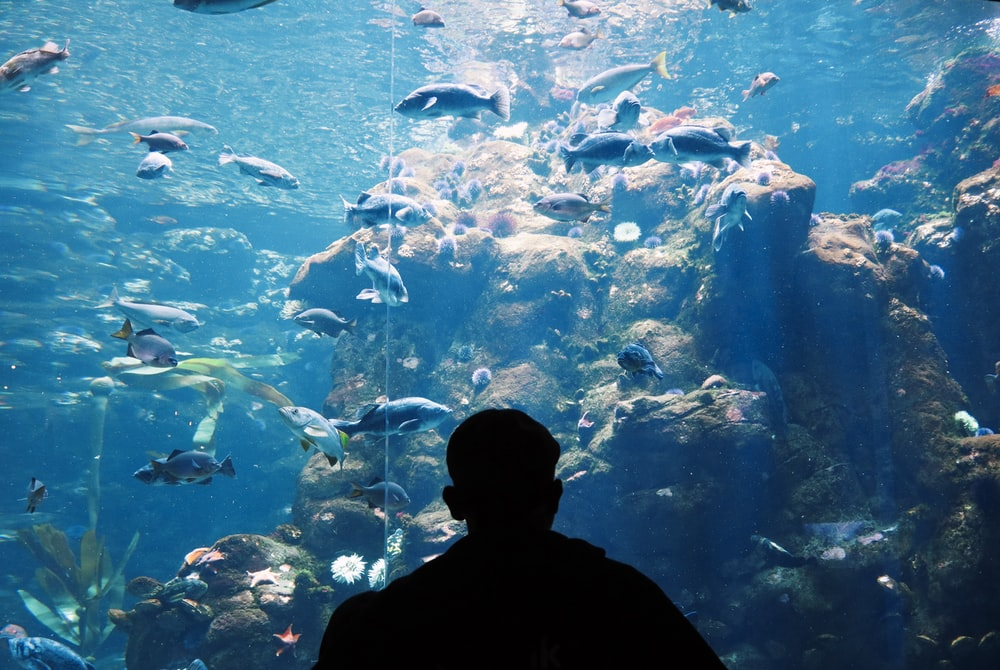 man standing in front of a big aquarium