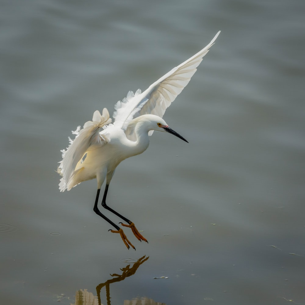 white bird flying above body of water during daytime
