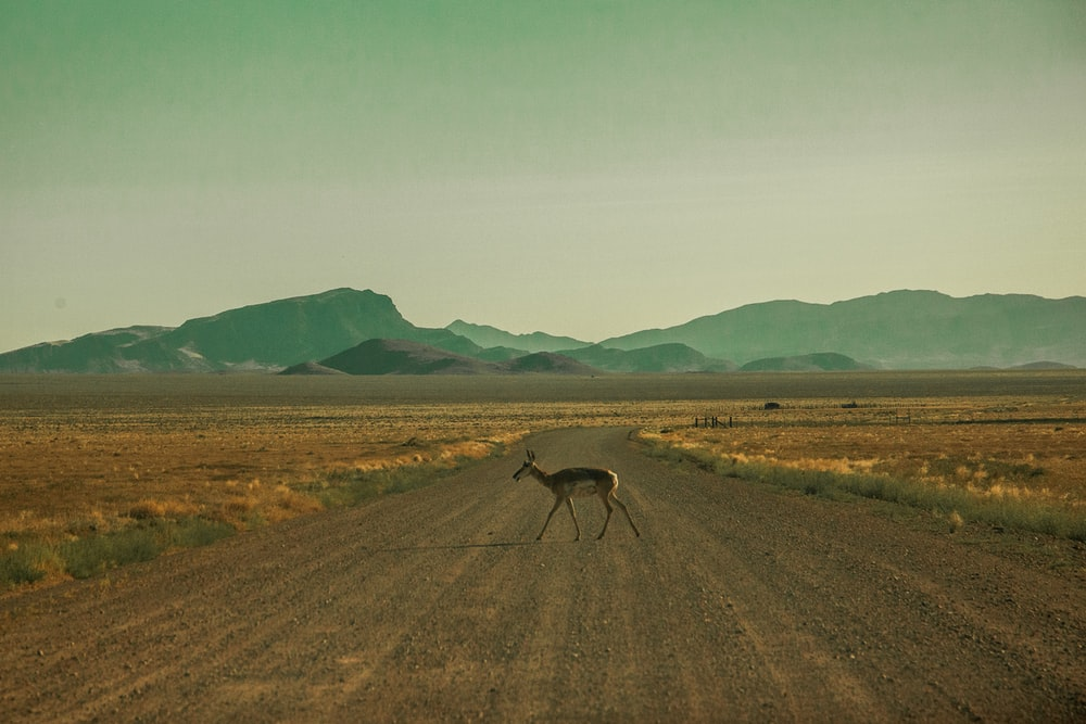 brown deer crossing road during daytime