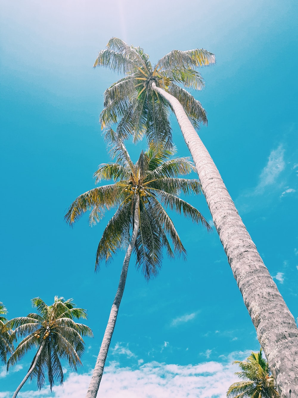 low angle photo of palm tree under clear blue sky