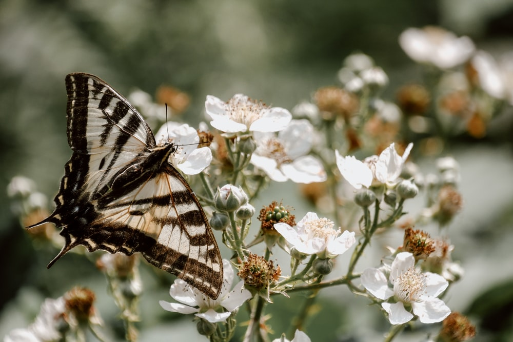 brown and white butterfly on white petaled flower
