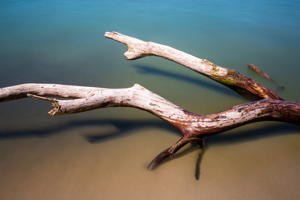 brown driftwood floating in water