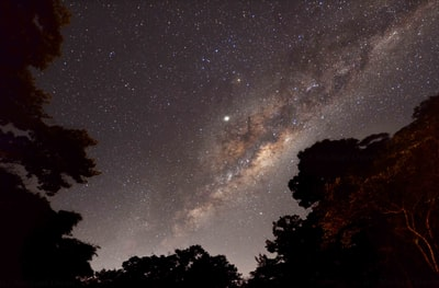 silhouette of trees under starry night milkyway teams background