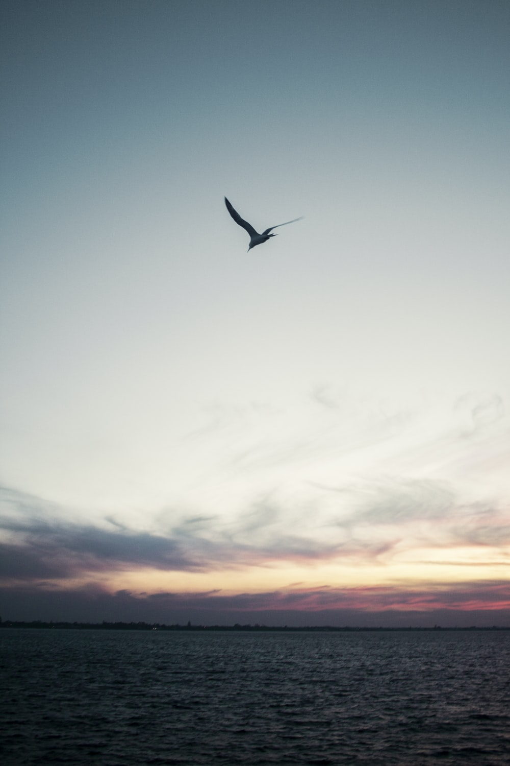 silhouette of bird flying above sea during golden hour