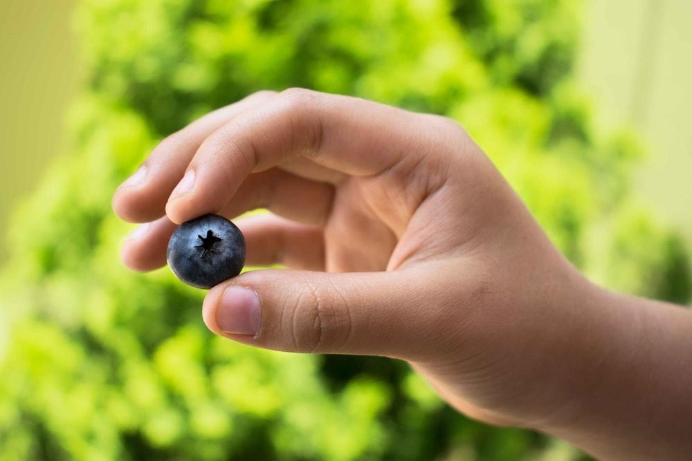 person holding black fruit