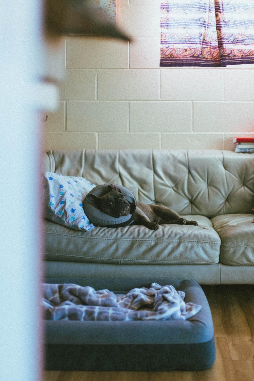 dog on white fabric sofa