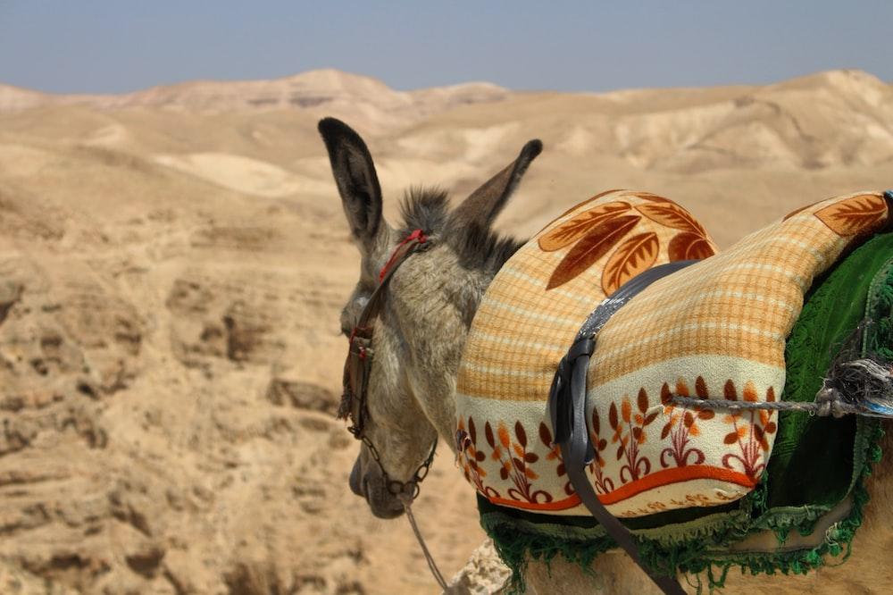 donkey with multicolored saddle