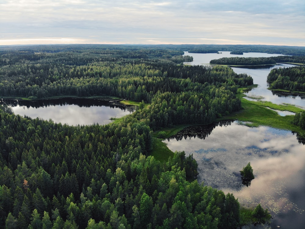 aerial view of trees near body of water