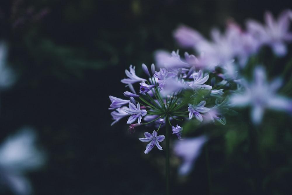 violet petaled flowers