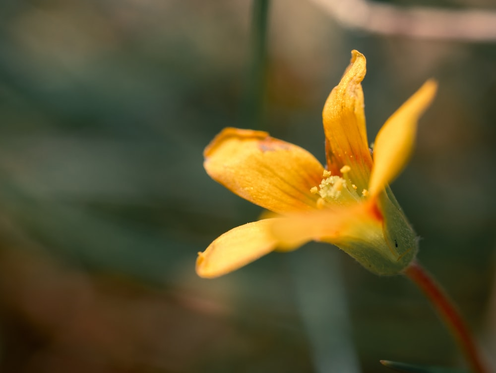 blooming yellow petaled flower