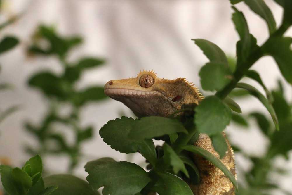 brown lizard on plant