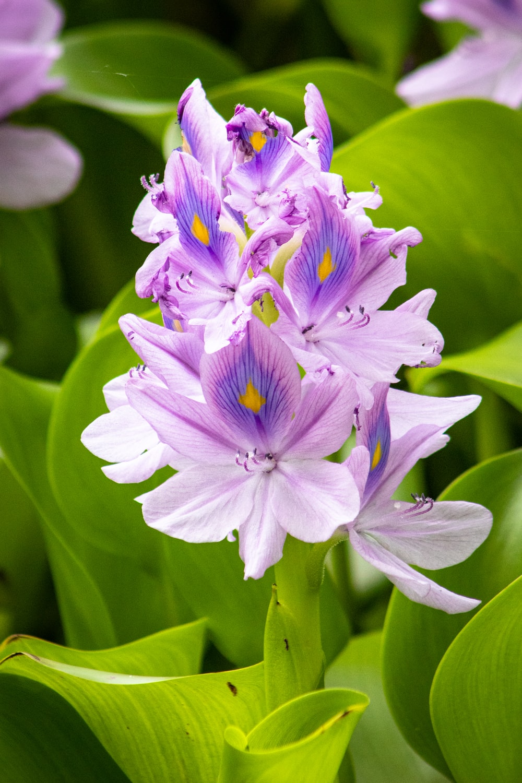 purple petaled flower plant