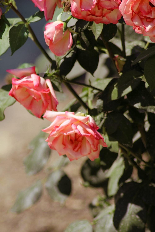 red-petaled flowers