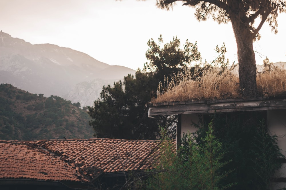 houses near trees