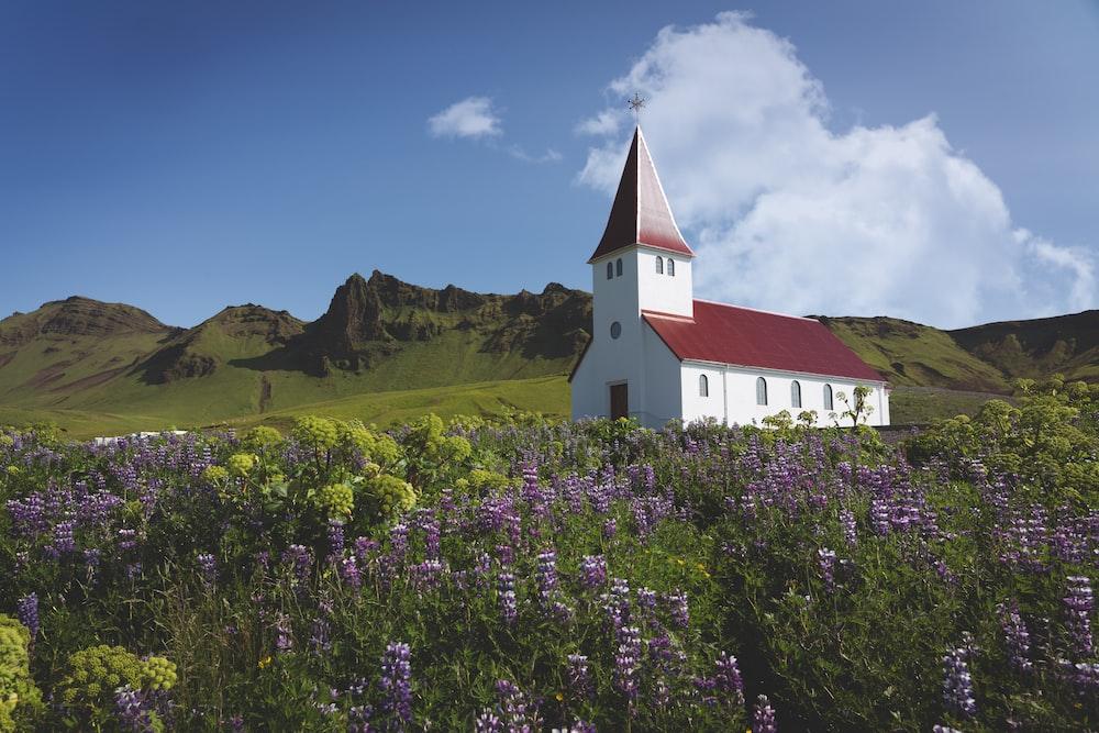 chapel near flower field