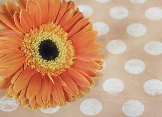 beige petaled flower on polka dot textile