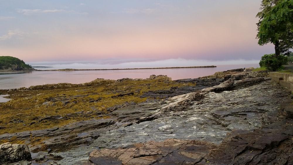 rock near shore