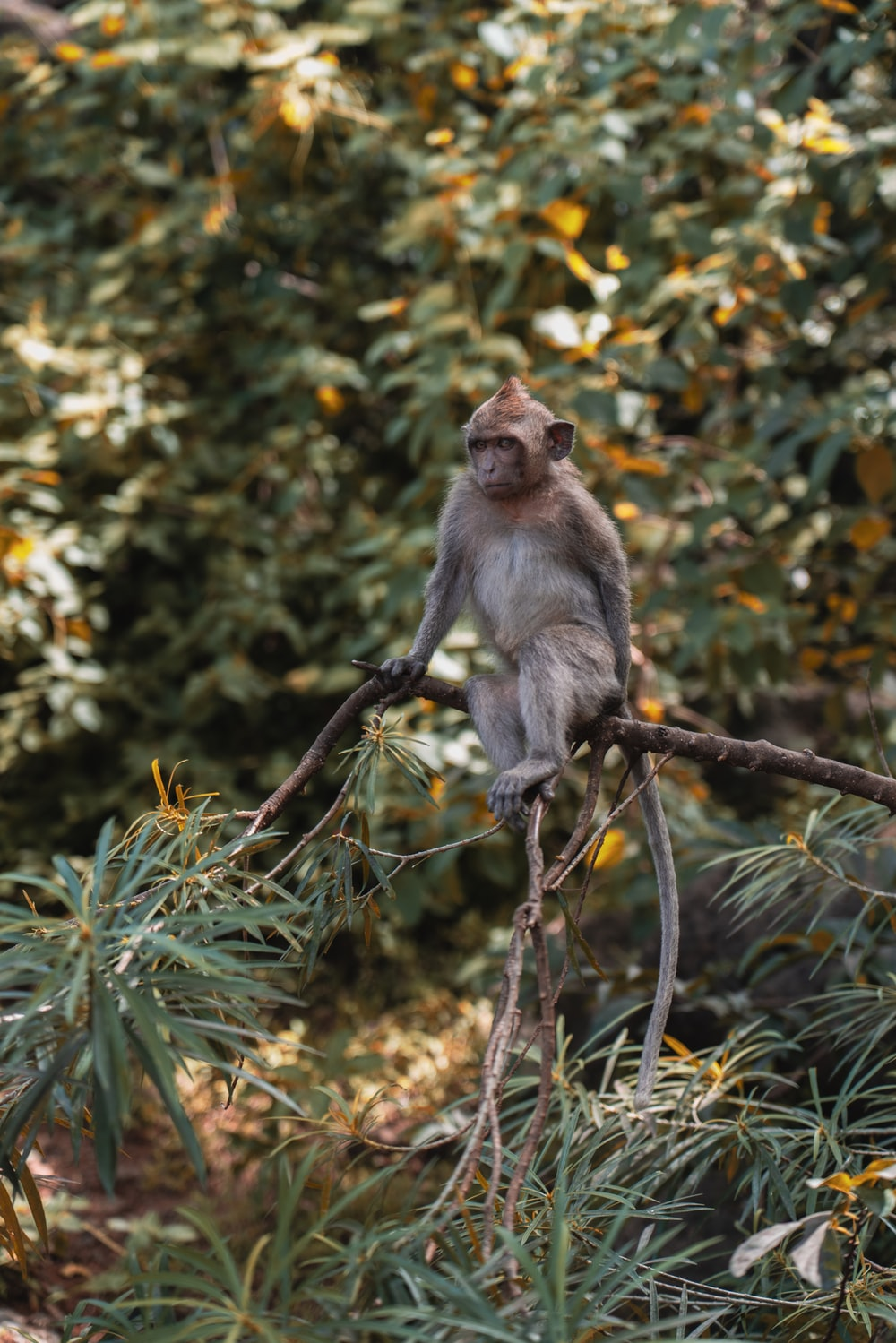brown monkey on selective focus photography