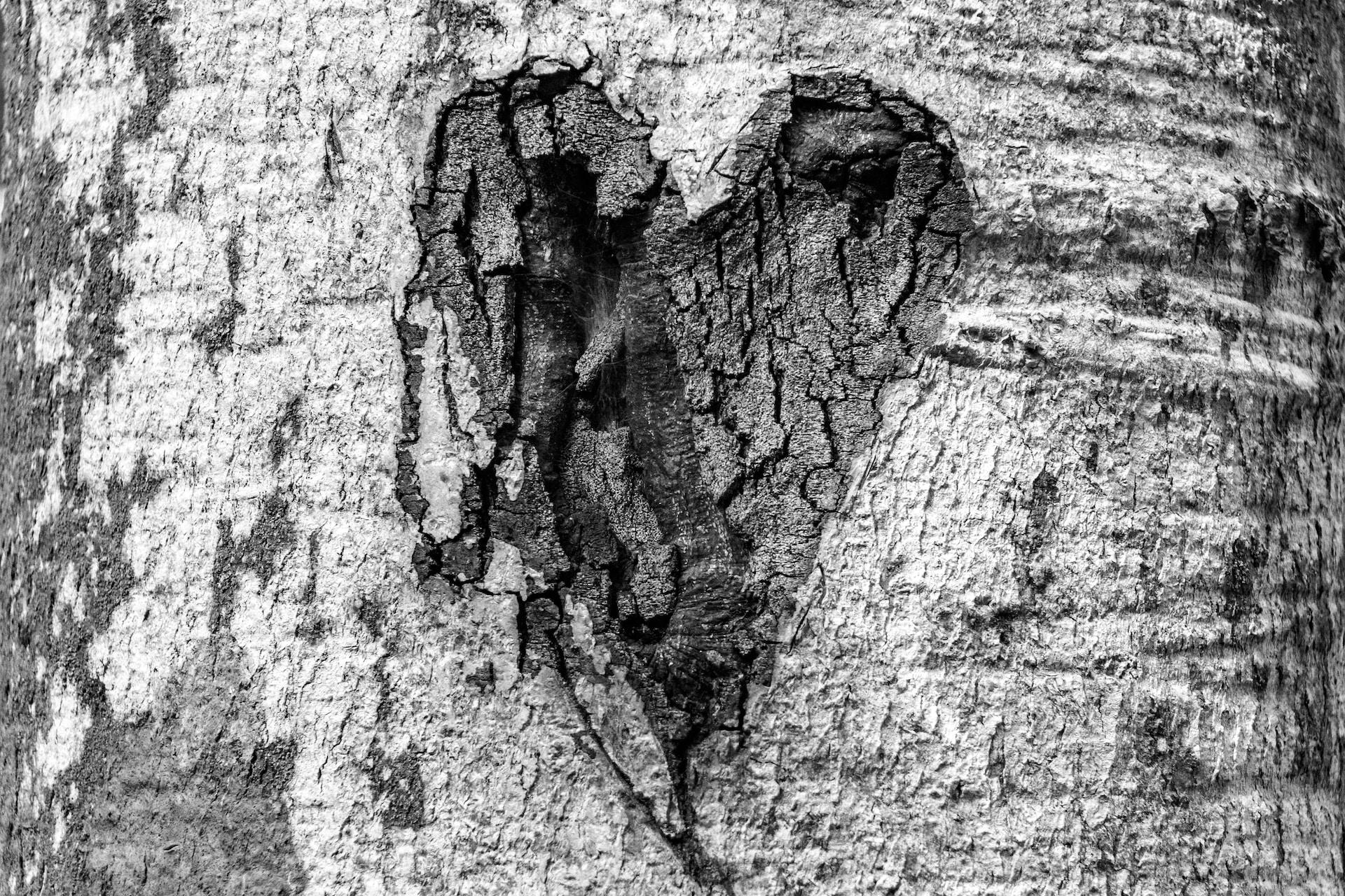 heart shape in tree trunk