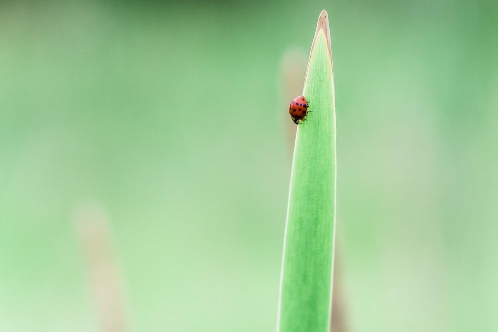 red lady bug on leaf