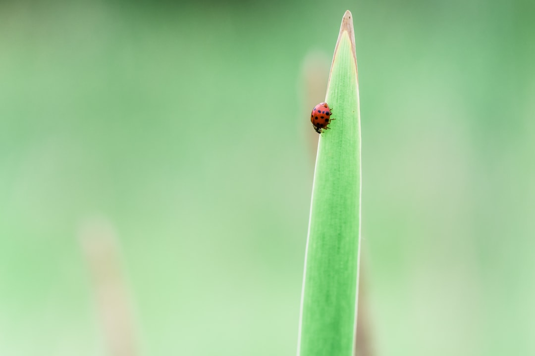 Lady bug in a marsh. Lovely for an instagram quote background.