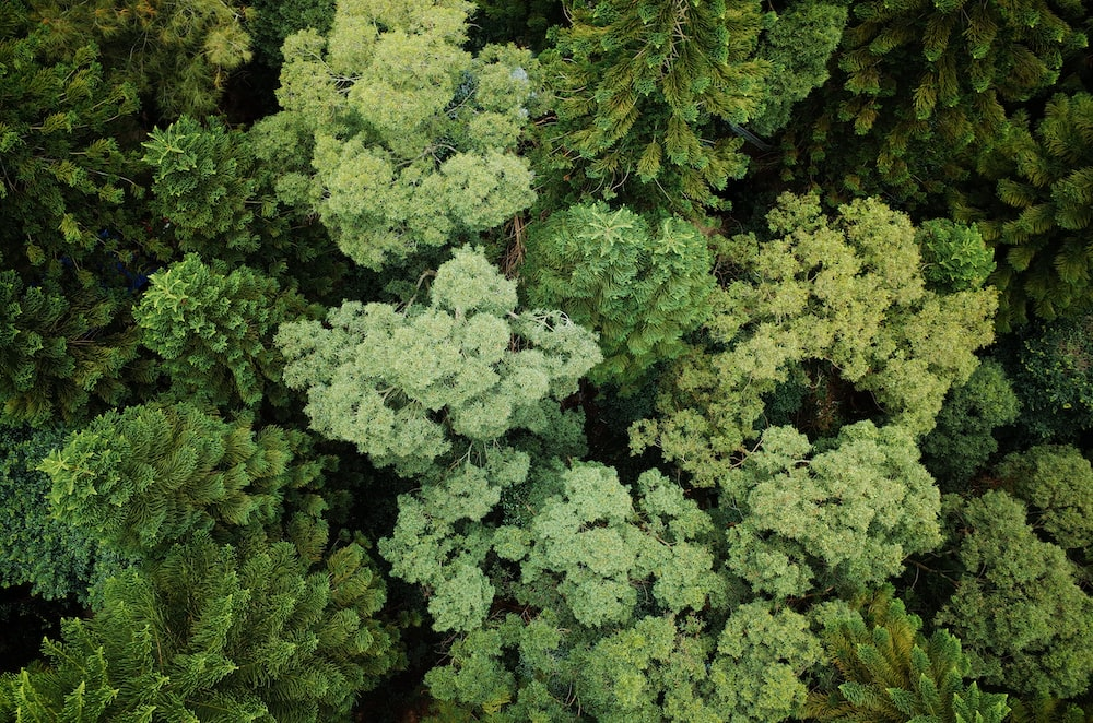 aerial photography of forest