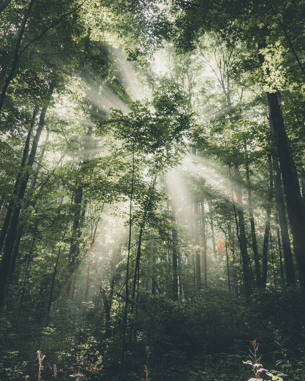 light piercing through trees