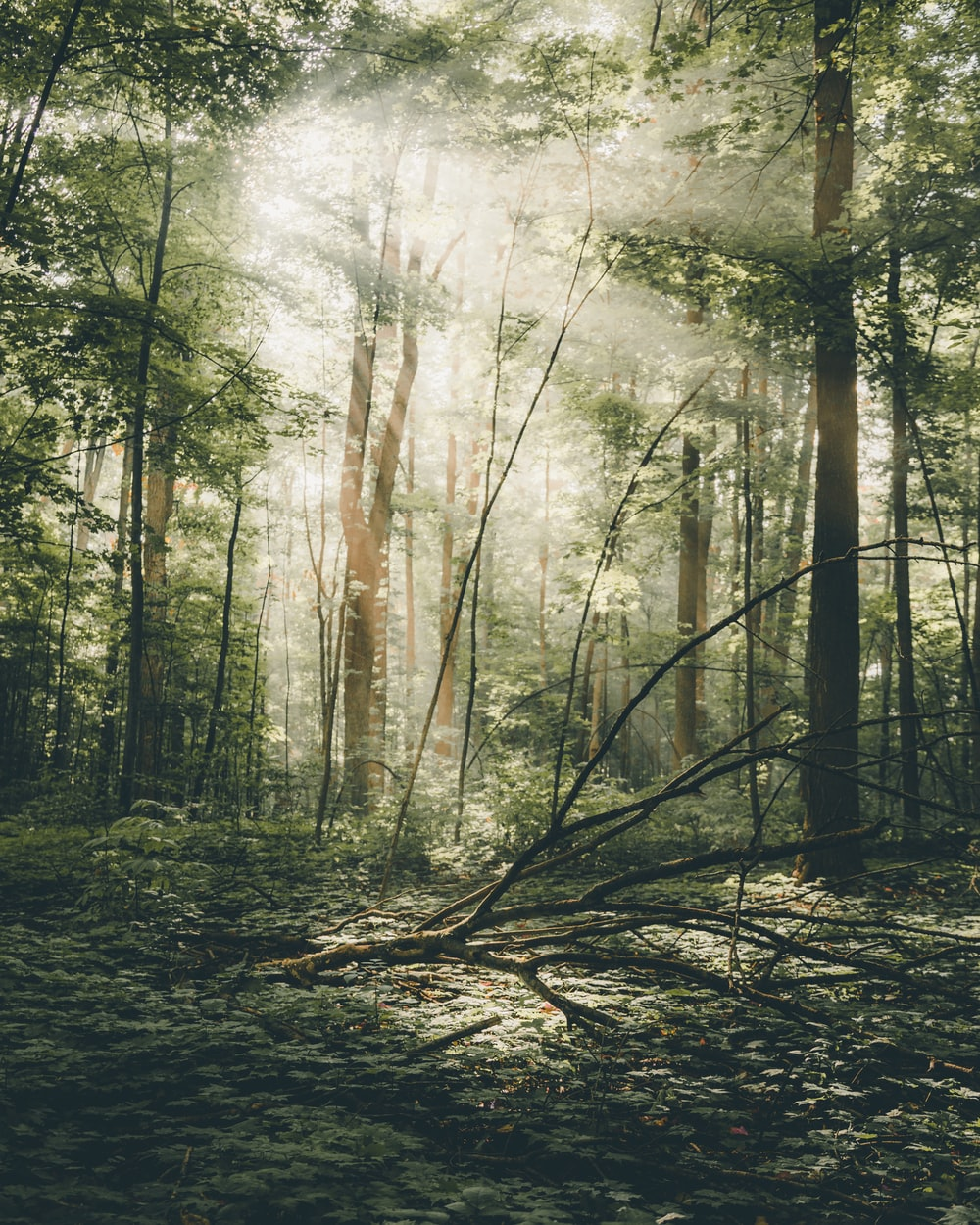 forest scenery