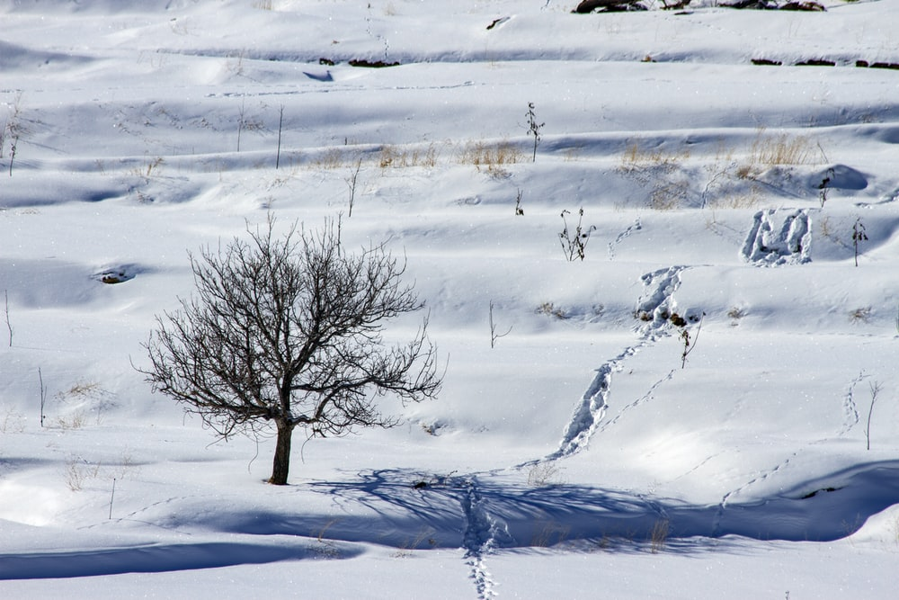 bare tree on icy surface