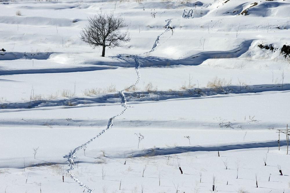 black bare tree on snow