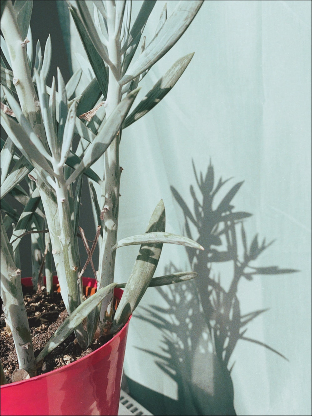 green succulent plant on red plastic pot