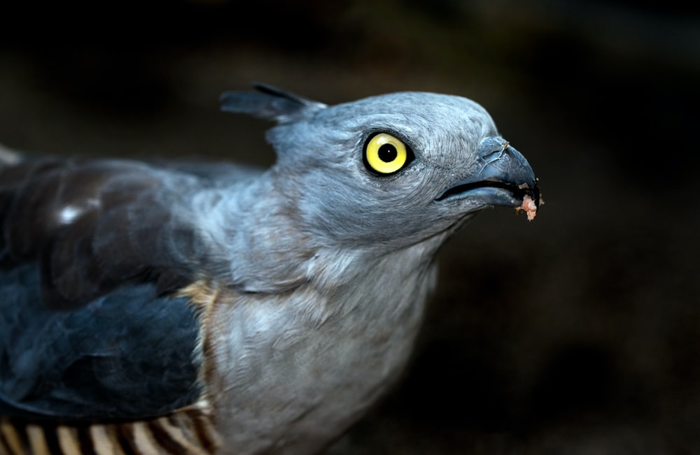 photo of gray and blue bird