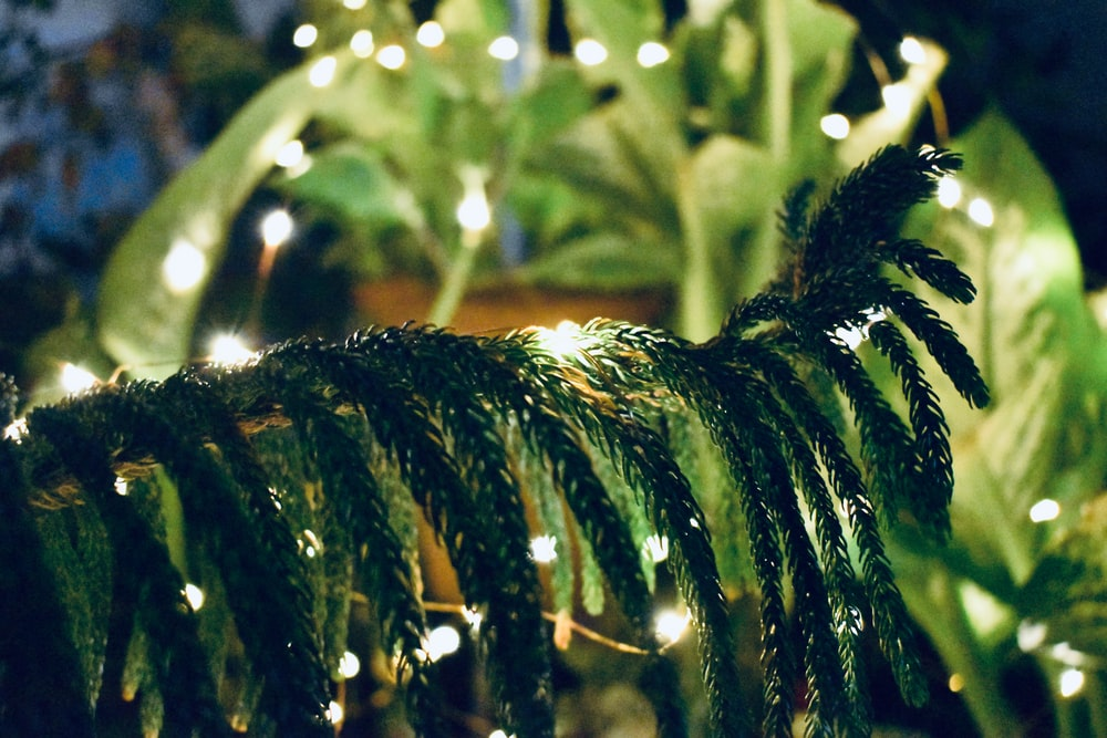 green trees with LED light close-up photography
