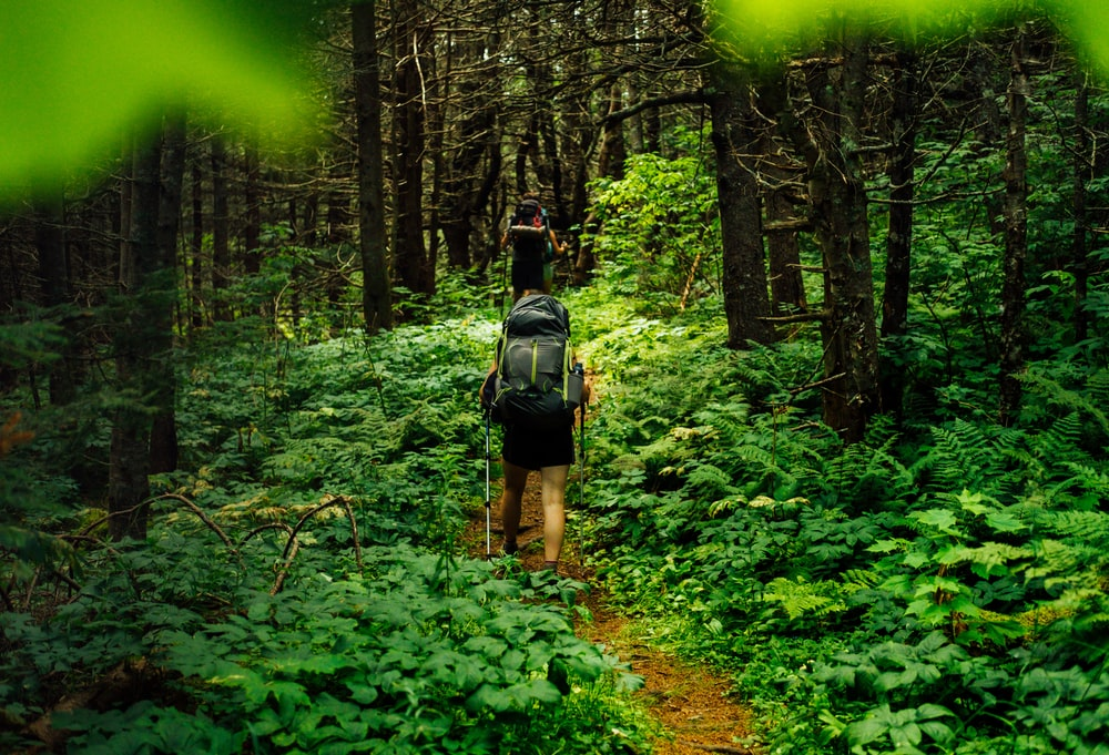 person walking on forest