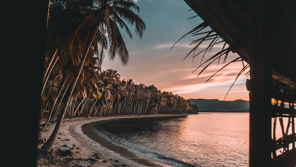 green coconut trees lining up the beach
