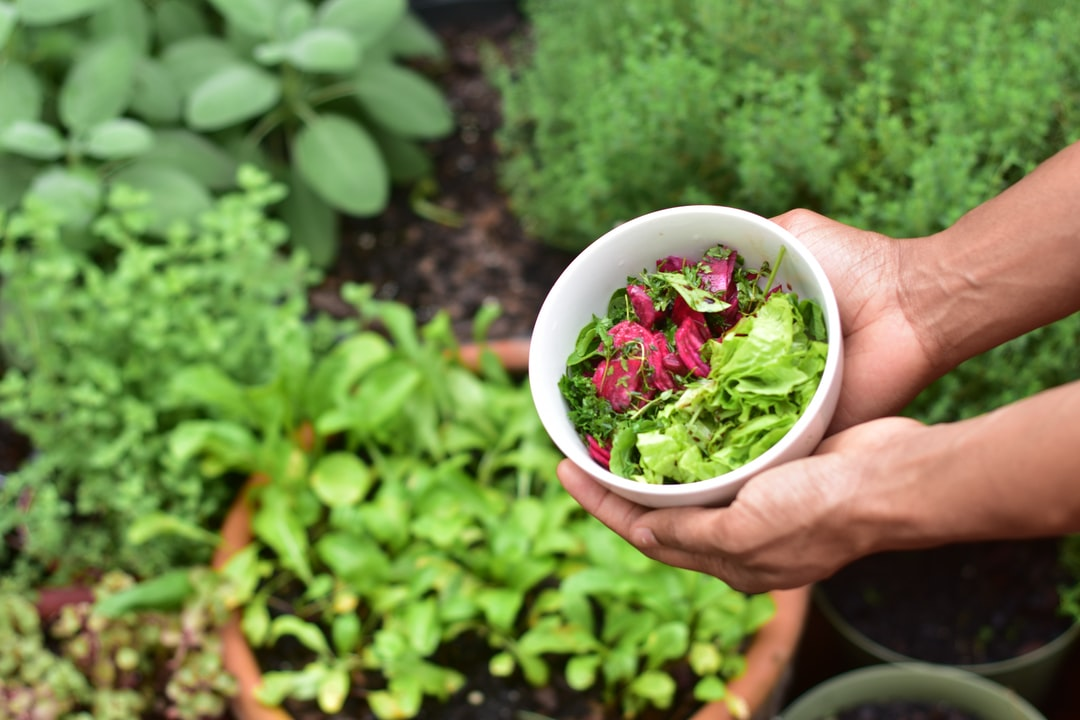 Grow your own organic food container gardening