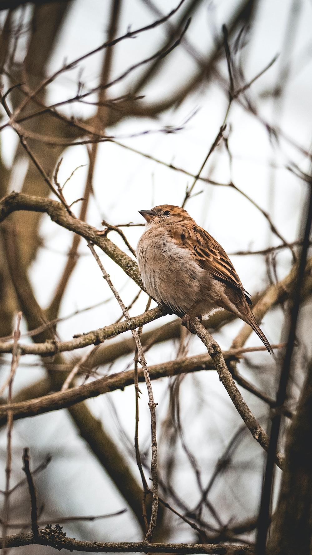 brown sparrow bird on bare tree