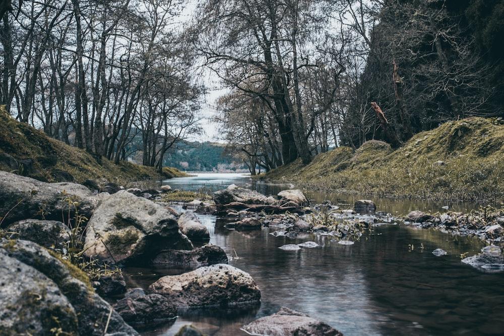creek near bare trees