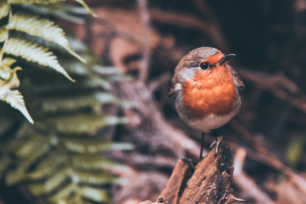 orange and grey bird