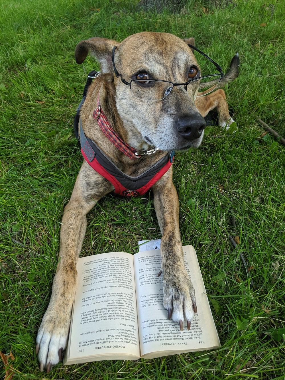 dog wearing eyeglasses sits on grass