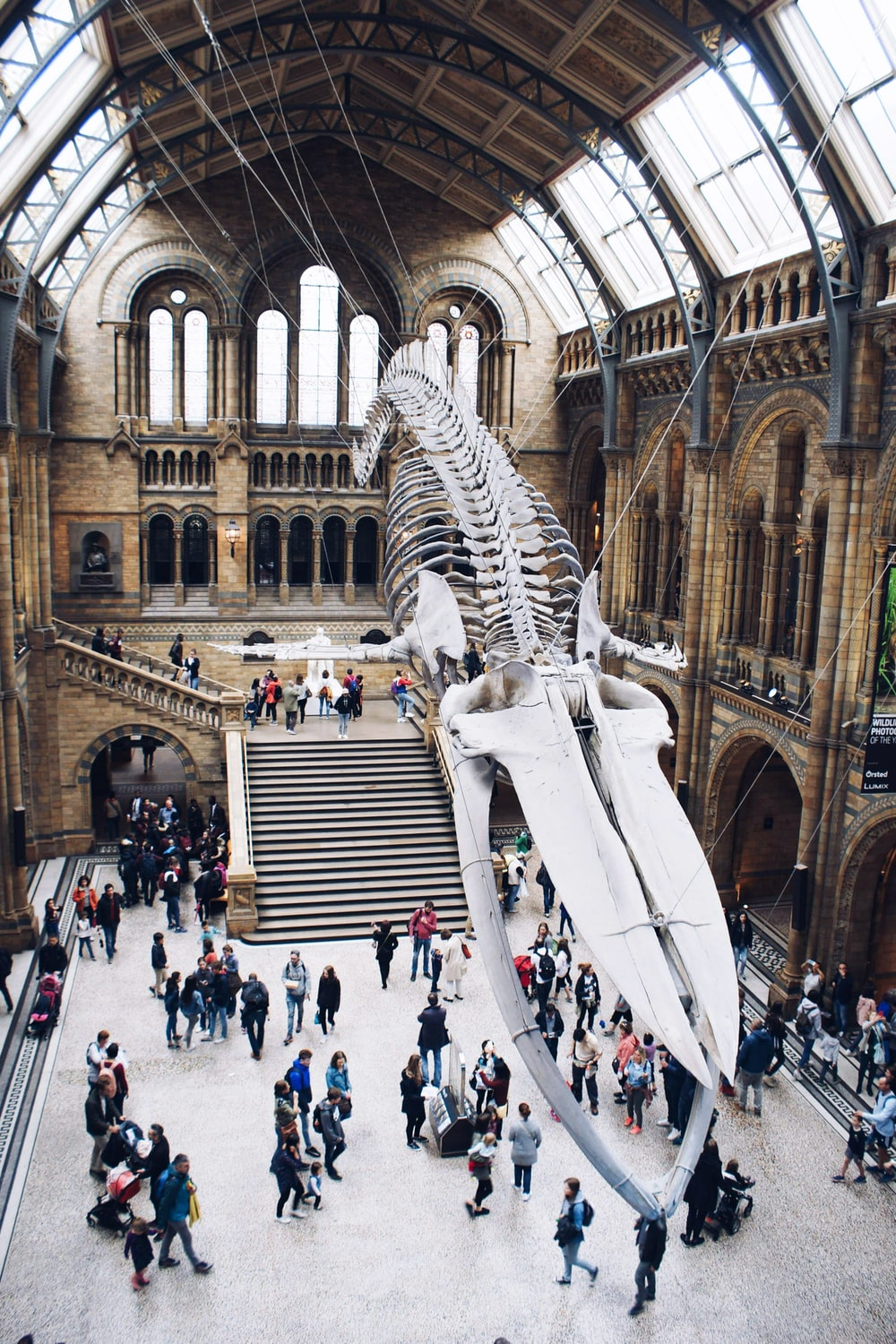 people looking up into megalodon skeleton