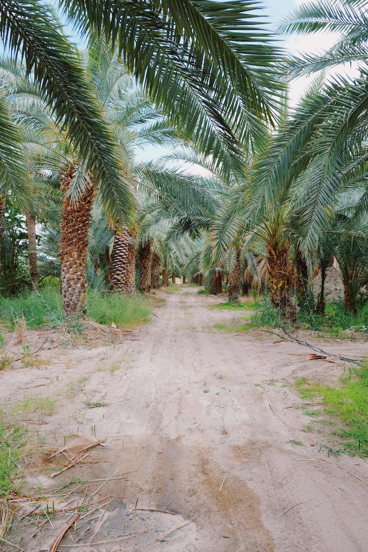 green palm tree lot