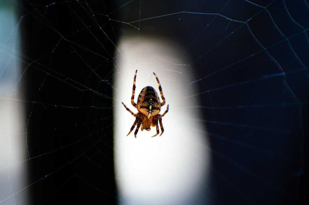 photo of brown and yellow spider