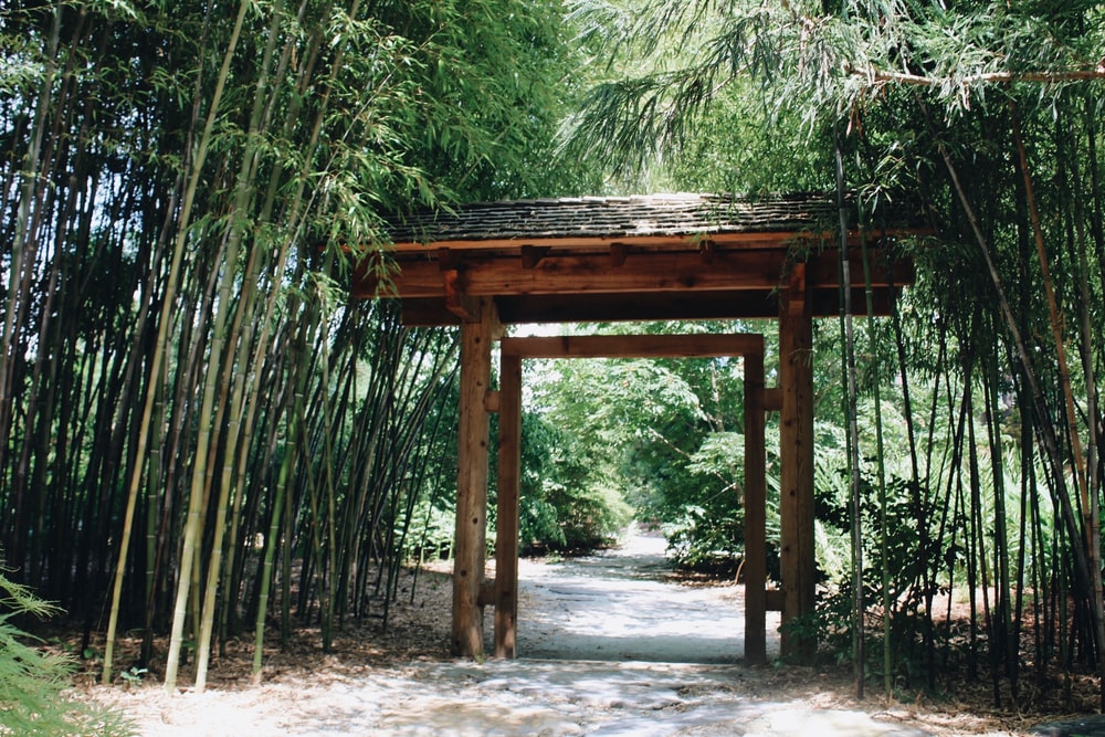 brown wooden gate near bamboo trees